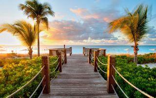Бесплатные фото мостик,доски,канаты,растительность,пальмы,пляж,море