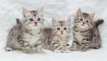 Фото бесплатно котята, малыши, трио
