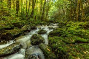 Бесплатные фото осень,речка,лес,деревья,природа