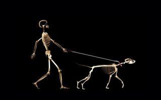 Бесплатные фото поводок,рентген,человек,собака