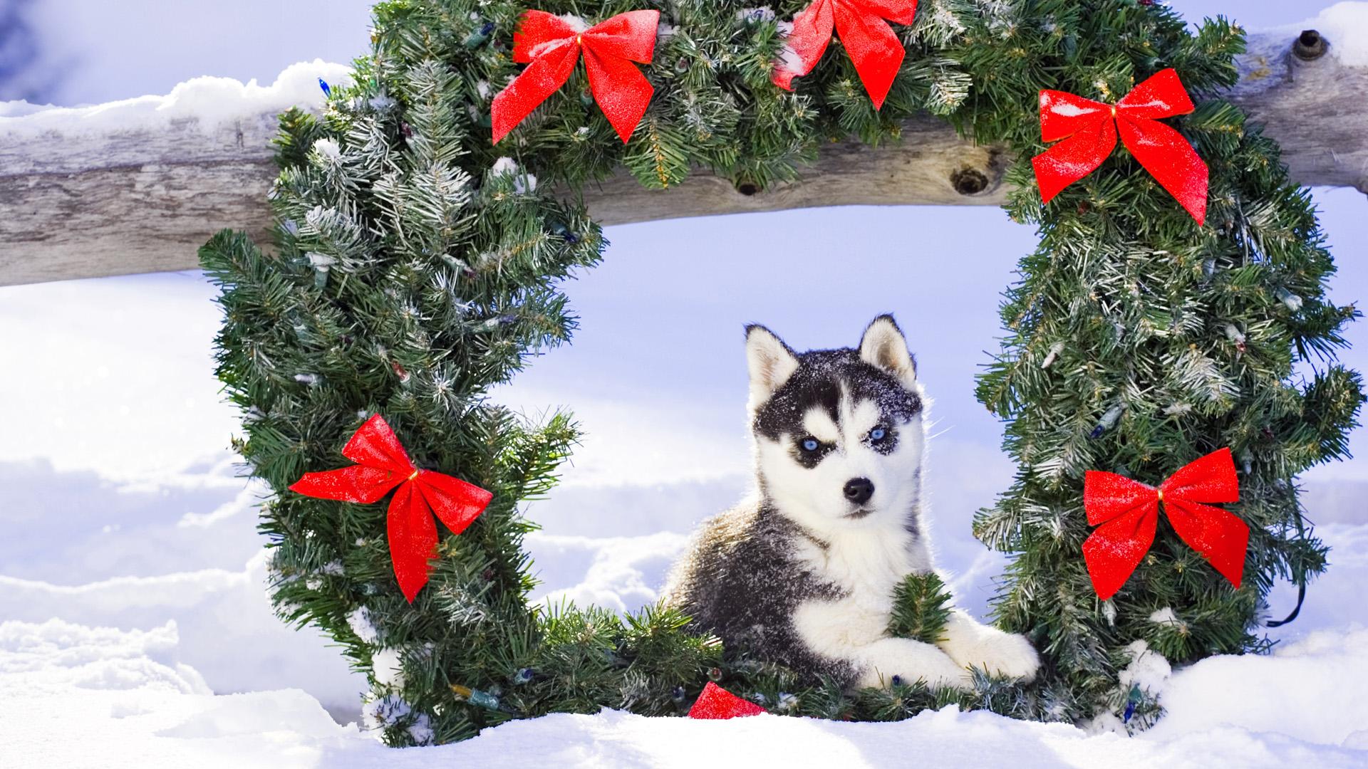 Обои рождество, рождественский венок, собака, щенок