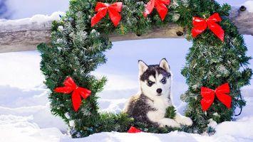 Бесплатные фото рождество, рождественский венок, собака, щенок, снег, праздники, собаки
