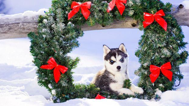 Фото бесплатно рождество, рождественский венок, собака, щенок, снег, праздники, собаки