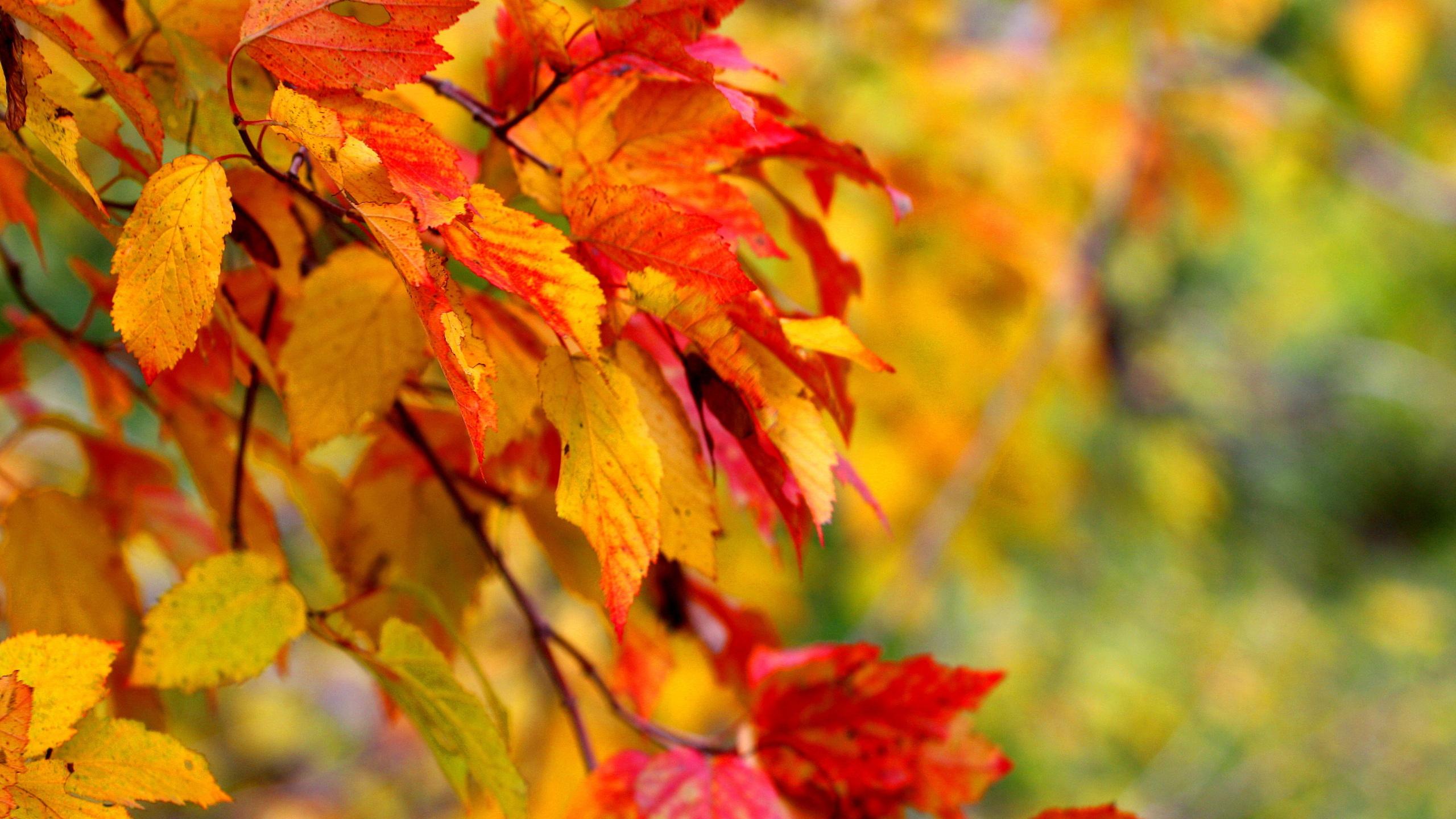 деревья, осень, листья