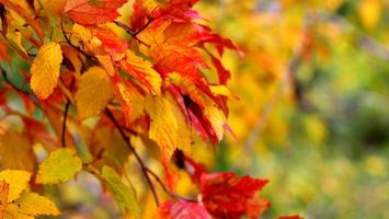 Фото бесплатно Береза, листья, пейзажи