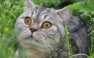 Бесплатные фото кот,морда,глаза,уши,усы,шерсть,трава