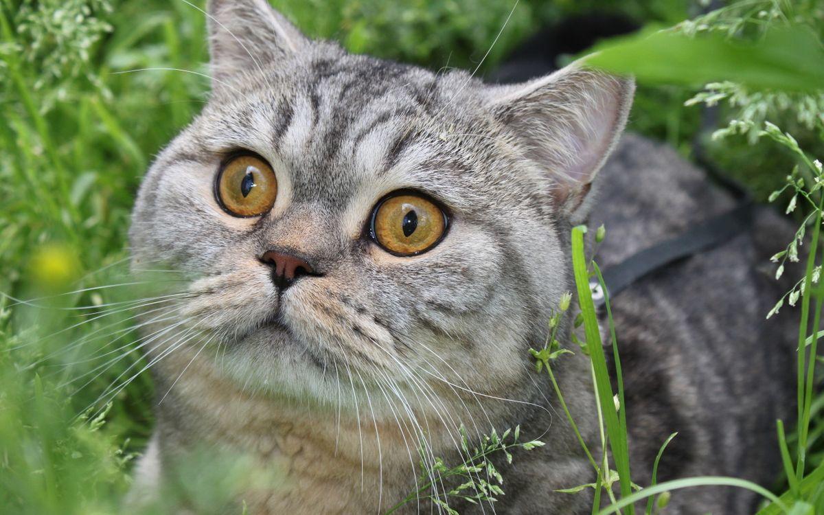 Free photo mustache, cat, cats - to desktop