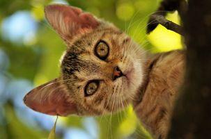 Бесплатные фото кот,дерево,лес,парк,листья,зелень,зеленый