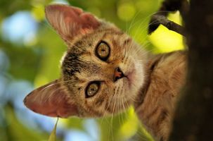 Фото бесплатно кот, дерево, лес