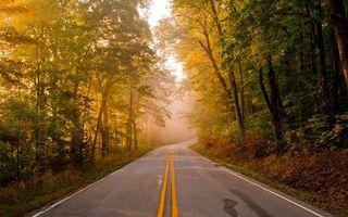 Бесплатные фото осень,дорога,разметка,деревья,листва,туман,пейзажи