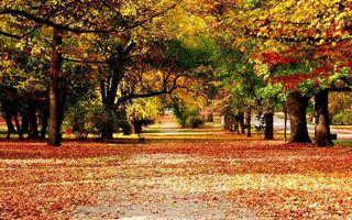 Бесплатные фото осень,парк,листопад,листья,деревья,скамейка,тратуар