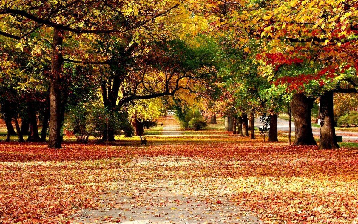 Обои осень, парк, листопад, листья, деревья, скамейка, тратуар, природа на телефон | картинки природа - скачать