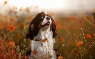 Заставки пес, щенок, усы
