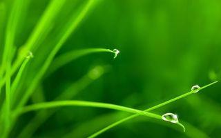 Фото бесплатно трава, зеленая, капли