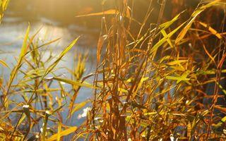 Бесплатные фото трава, осень, река, природа, макро