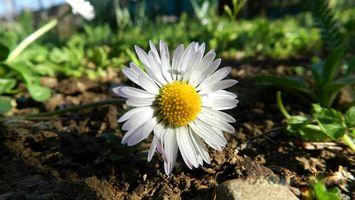 Фото бесплатно цветы, земля, зелень