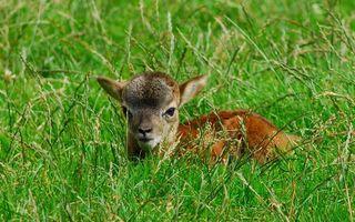 Фото бесплатно зверь, детеныш, трава