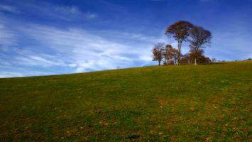 Photo free trees, grass, field