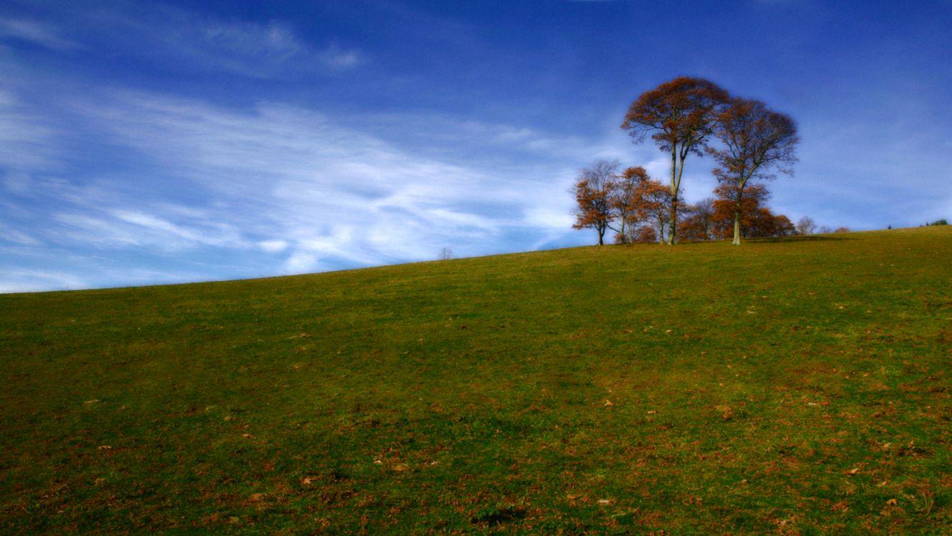 Фото бесплатно деревья, трава, поле, листья, небо, облака, природа, природа