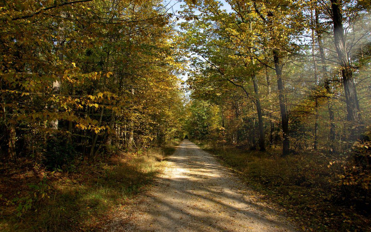 Фото бесплатно дорога, загородная, деревья - на рабочий стол