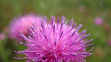 Бесплатные фото цветок,природа,лето,макро,настроения,разное,цветы