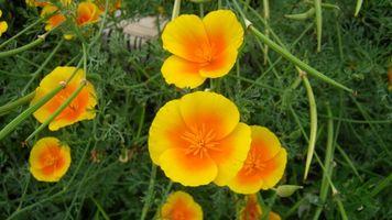 Фото бесплатно цветы, лето, разное