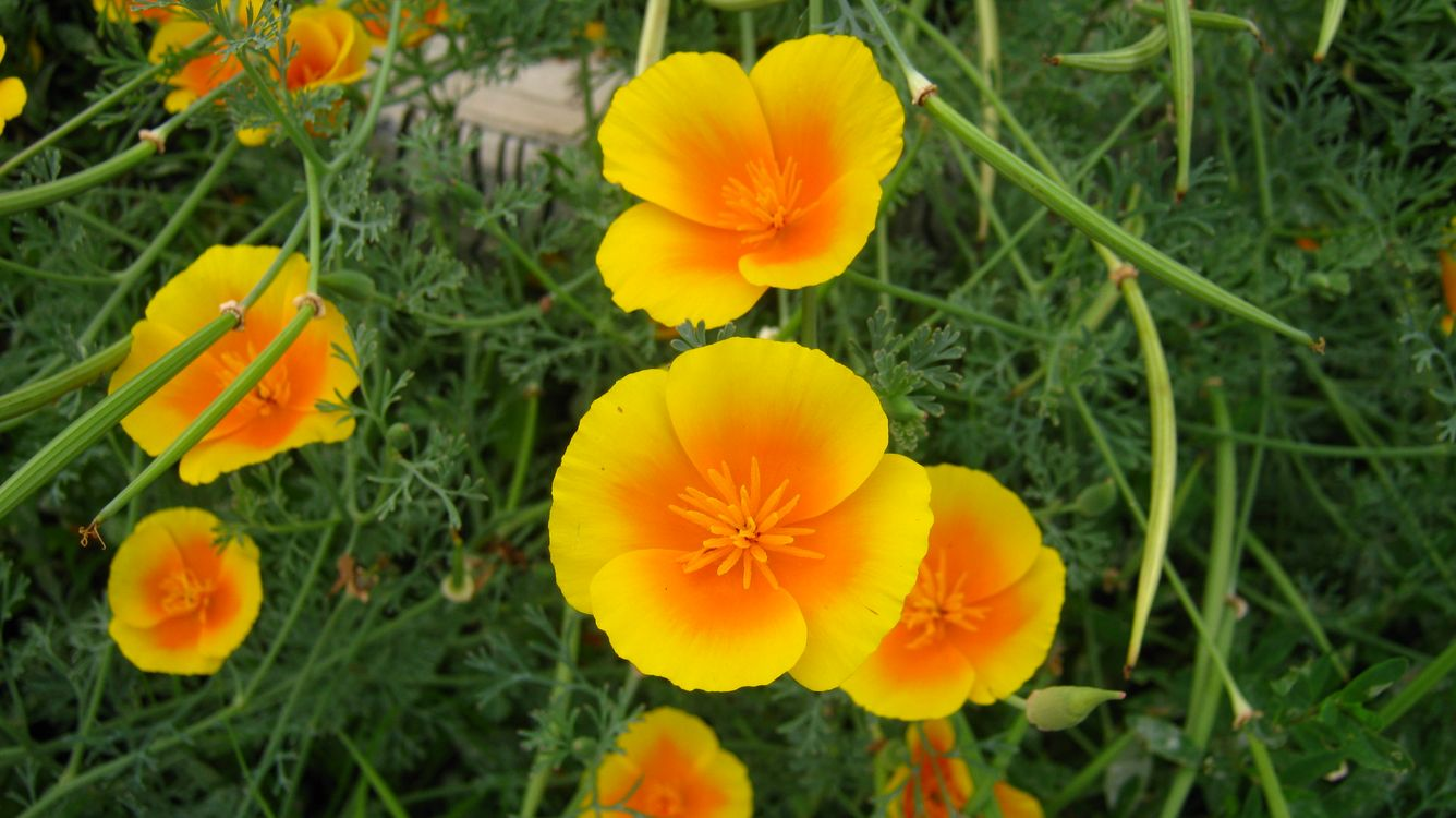 Обои цветы, природа, лето картинки на телефон