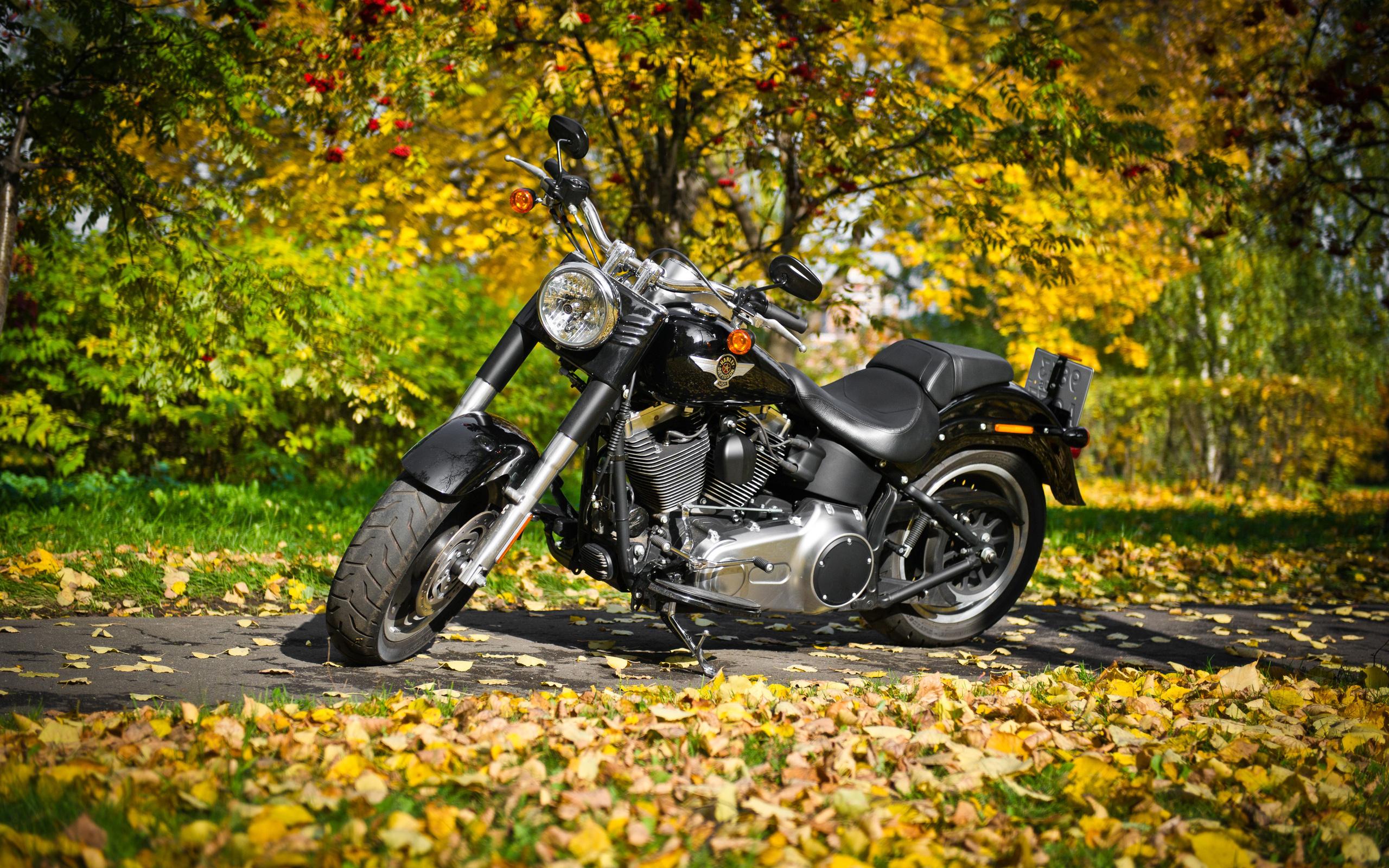 harley-davidson, чёрный цвет, мотоцикл