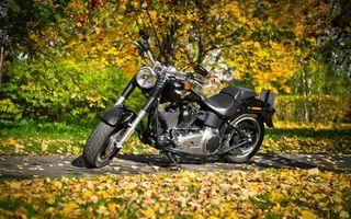 Бесплатные фото harley-davidson,чёрный цвет,мотоцикл,осень,жёлтая листва,тротуар,мотоциклы