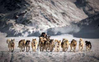 Бесплатные фото хаски, нарты, упряжь, снег, погонщик, скорость, собаки