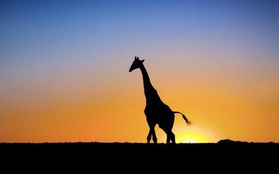 Фото бесплатно жираф, пустыня, небо