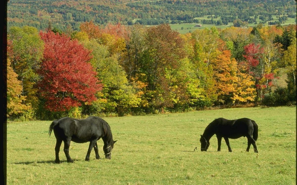 Фото бесплатно кони, черные, гривы - на рабочий стол