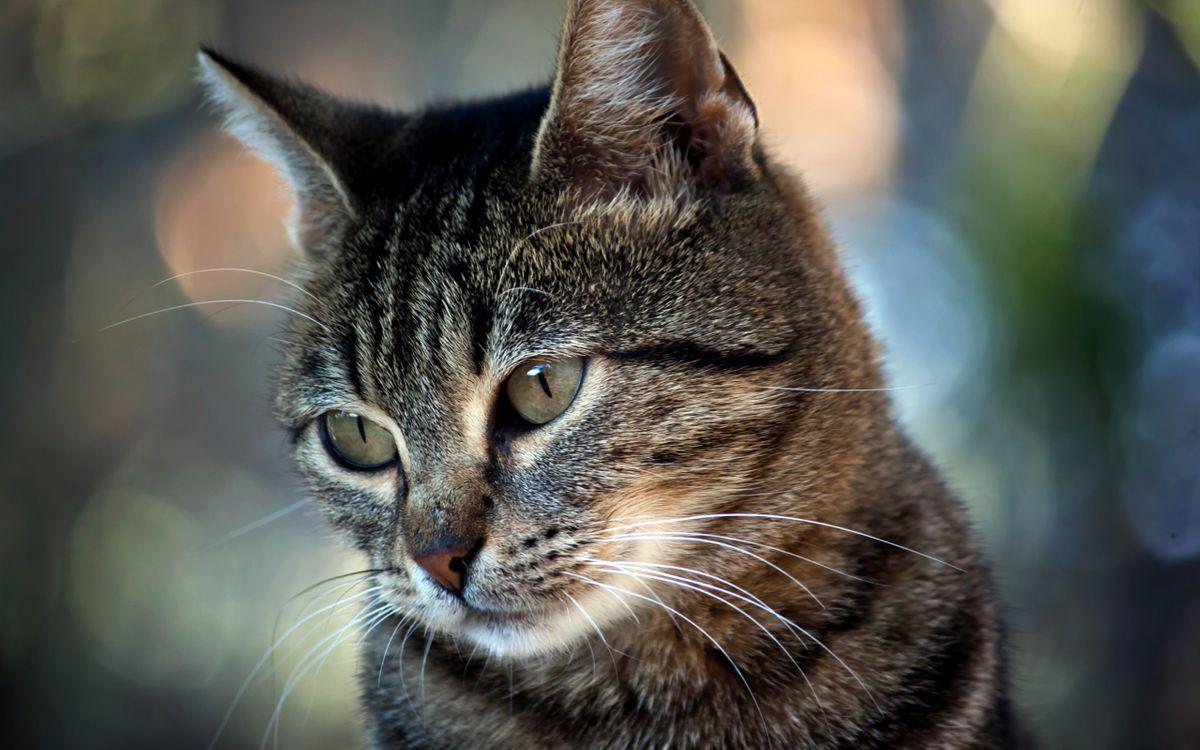 Обои кошки, Кошка, глаза картинки на телефон