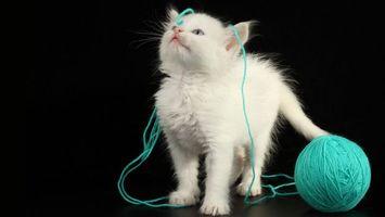 Фото бесплатно кошка, белая, котенок