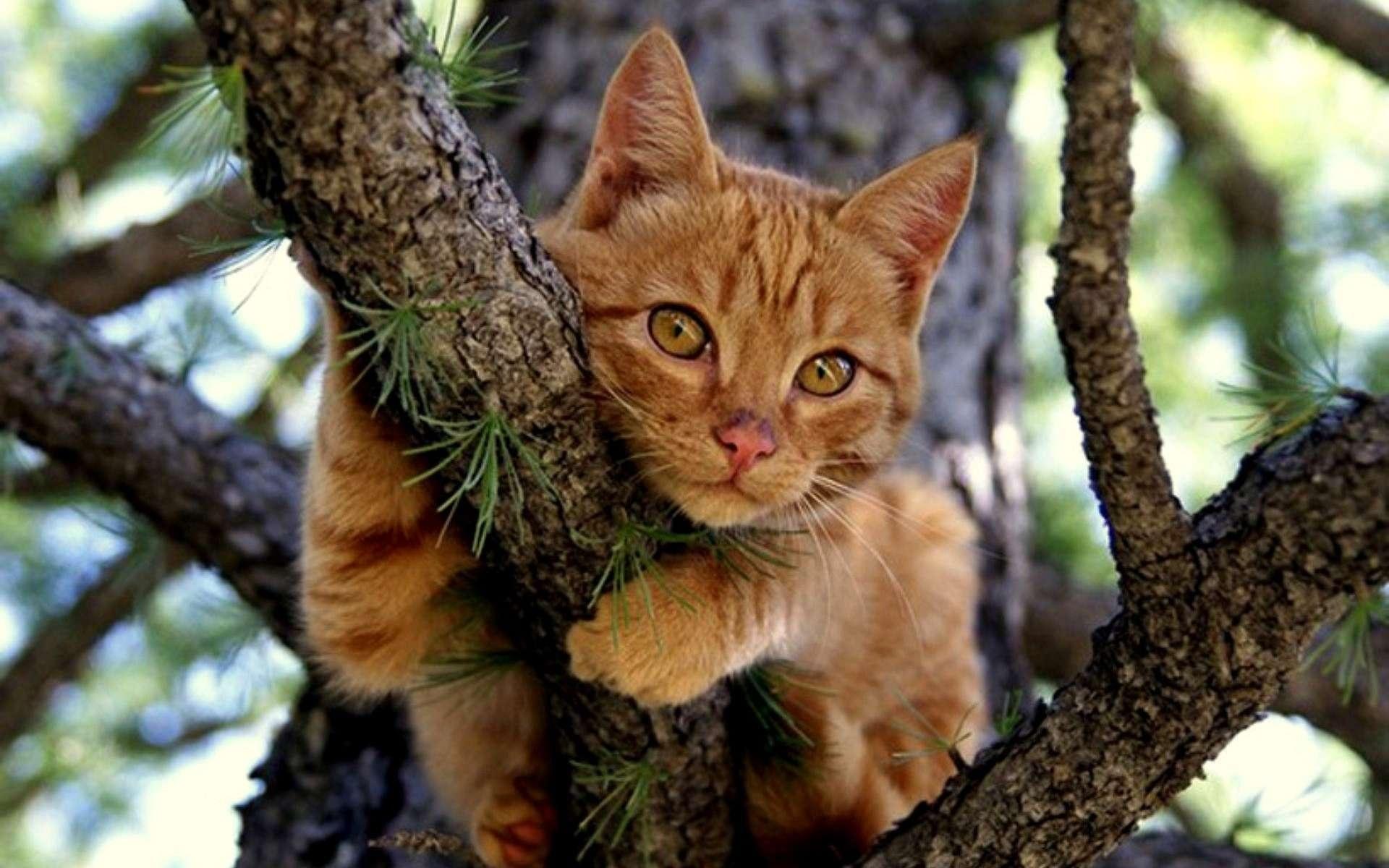 котик возле дерева бесплатно