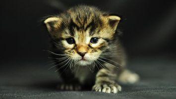Фото бесплатно котенок, маленький, беспомощный