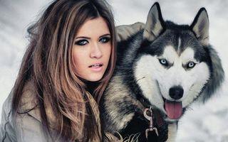 Бесплатные фото лайка,глаза,голубые,шерсть,порода,пес,щенок