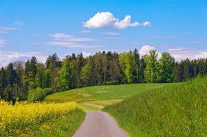 Бесплатные фото лес,деревья,листья,трава,поле,дорога,луг