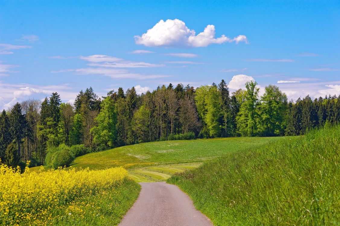 Фото бесплатно лес, деревья, листья, трава, поле, дорога, луг, лето, тепло, природа, природа - скачать на рабочий стол