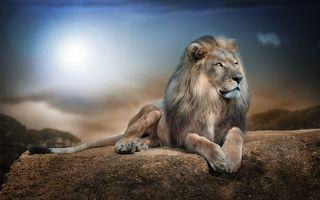 Бесплатные фото лев,взгляд,ночь,животные