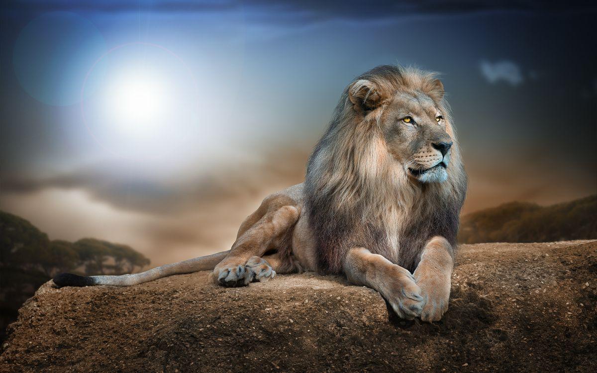 Фото бесплатно лев, взгляд, ночь, животные, животные