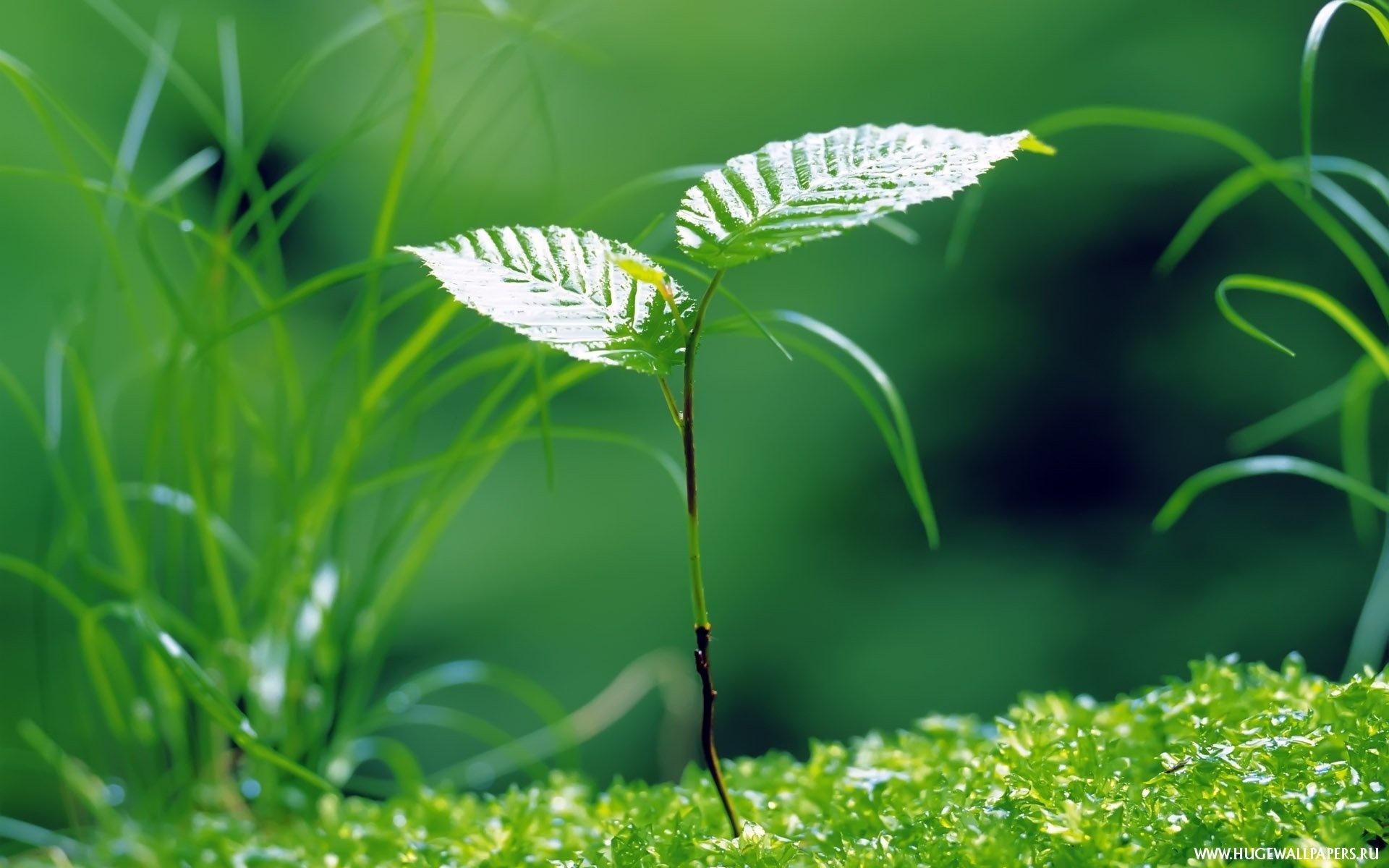 зеленые стебельки скачать