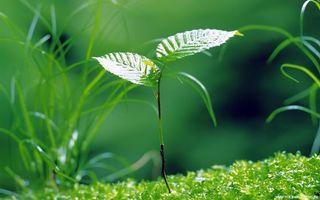 Бесплатные фото листья, росток, дерево, трава, солнце, свет, лето