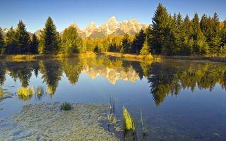 Бесплатные фото озеро,трава,тина,отражение,деревья,лес,горы