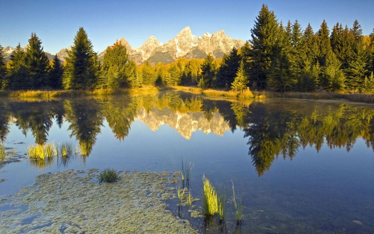Фото бесплатно озеро, трава, тина - на рабочий стол