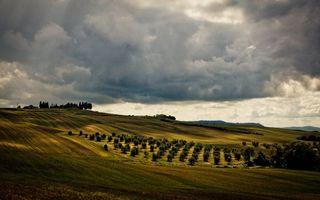 Фото бесплатно поле, простор, трава