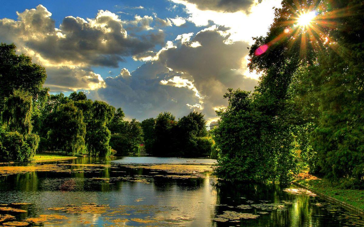 Фото бесплатно пруд, лилии, парк, трава, деревья, ветки, лучи, солнца, природа, природа