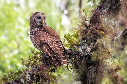 Photo free owl, forest, moss