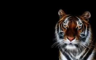 Бесплатные фото тигр,3d,art,черный,фон,3d графика