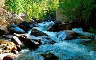 Фото бесплатно трава, вода, река